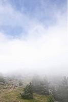 Woman trekker walking into mountain mist