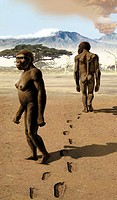 Australopithecus afarensis, artwork. This hominin lived between 3.9 and 2.9 million years ago in what is now eastern Africa. It is thought that A. afa...