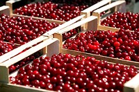 Packed red cherries