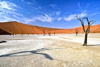 Deadvlei dead trees. Deadvlei is a clay pan located near the famous salt pan of Sossusvlei, inside the Namib-Naukluft Park in Namibia