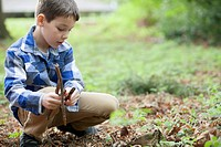 Young boy collecting kindling (thumbnail)