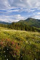 Naunz in spring, Naunz, Kellerjoch, Tux Prealps, Tyrol, Austria, Europe