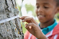 Elementary student measuring tree diameter