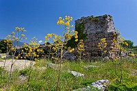 Flowers and the remains of an old city in the ruins of Paestum, Italy