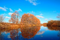 oak wood on coast river