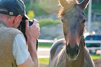 man taking photographs of the horse farm animal