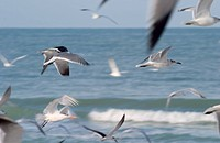 Shore birds, Florida