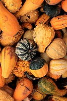 Harvested decorative gourd