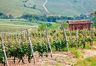 Tuscany  Vineyard in the middle of the most famous wine region of Italy