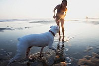 A girl and her dog playing on a beach at sunset