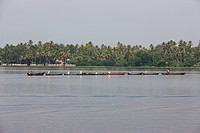 a group of fishermen in traditional canoes, being towed home after work in the Kerala Backwaters