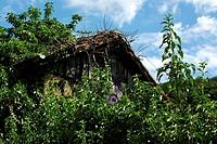 Überwucherte Weinberghütte