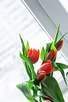 Bouquet of gentle red tulips in spring time