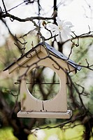 Magnolia stellata, Bird table.