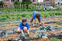 Detroit, Michigan - Volunteers from the American Federation of Teachers and from the local community work in a community garden