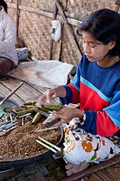 Myanmar, Burma  Burmese Woman of Intha Ethnic Group Making Cheroots, Inle Lake, Shan State  Corn husks are used as filters, cordia dichotoma leaves us...