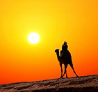 bedouin on camel silhouette against sunrise