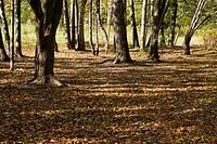 Trees in an autumn park on a sunny evening