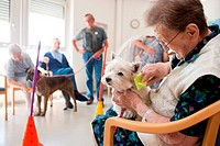 Association of dogs trained visitors to visit the sick and the elderly. Workshop runing by volunteer teachers and staff of the institution. Residentia...