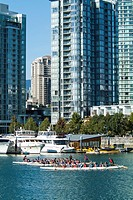 paddlers in dragon boats in front of buildings on the north shore of False Creek in Vancouver, BC, Canada