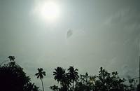 Palm trees  Sulawesi