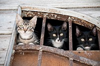 Three cats, Bakar, Croatia