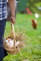 Germany, Bavaria, Boy with basket of eggs and chicken on farm