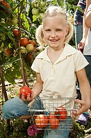 Germany, Bavaria, Girl gathering tomatoes in vegetable garden, smiling, portrait
