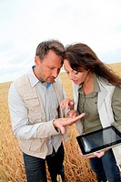 Team of agronomists analysing wheat cereal in field