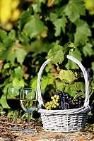the wine world