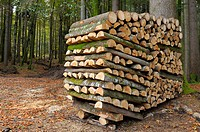 Pile of wood, Karwendel mountains, Bavaria, Germany