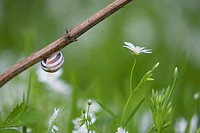A snail hangs on a branch over flowers.
