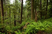 Deep in the forest of the remote wilderness of Western Canada.