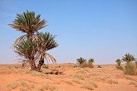 Oasen der Sahara