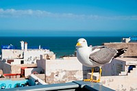 Seagull and the rooftops Essaouira, Morocco