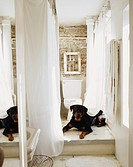 Rottweiler in Bathroom
