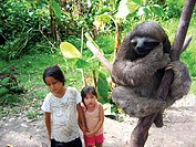 Two native girls of the Brazilian Amazon jungle watch their friend, the three toed sloth climb slowly.