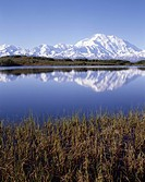 USA, Alaska, Summer, Tundra Pond, Mount McKinley, Denali National Park