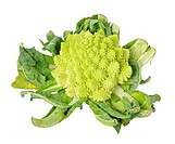 Isolated on white Romanesco broccoli