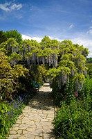 Path with a bench, blooming Wisteria Wisteria, Weinheim, Baden_Wuerttemberg, Germany, Europe