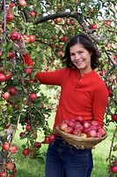 young woman harvesting red apples