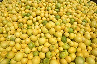 Thousands of lemons filling a truck after lemon harvest near Santa Paula, California.