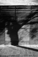Shadow of a tree on a wall, Valencia, Spain