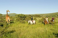 Female horseback riders ride horses in morning near Masai Giraffe at the Lewa Wildlife Conservancy in North Kenya, Africa