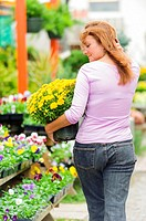 A 38 year old redheaded woman in a garden shop holding potted chrysanthemum plants