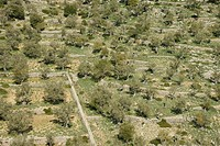 Muntanya grove of Sierra de Tramuntana Bunyola Mallorca Balearic Islands Spain