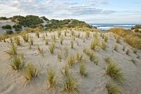 Cala Mesquida dune complex Llevant Peninsula Arta Mallorca Balearic Islands Spain