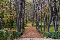 Line of trees in autumn at Retiro Park Madrid, Spain