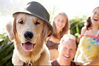 A golden labrador with tongue out, wearing a hat.