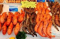 crustacean